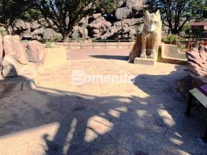 View of Mexican Grey Wolf sculpture as you enter the El Paso Zoo Chihuahuan Desert Exhibit featuring Bomanite Imprint Systems and Bomanite Exposed Aggreate to create a native habitat at the El Paso Zoo Chihuahuan Desert Exhibit installed by Bomanite Artistic Concrete & Pools.
